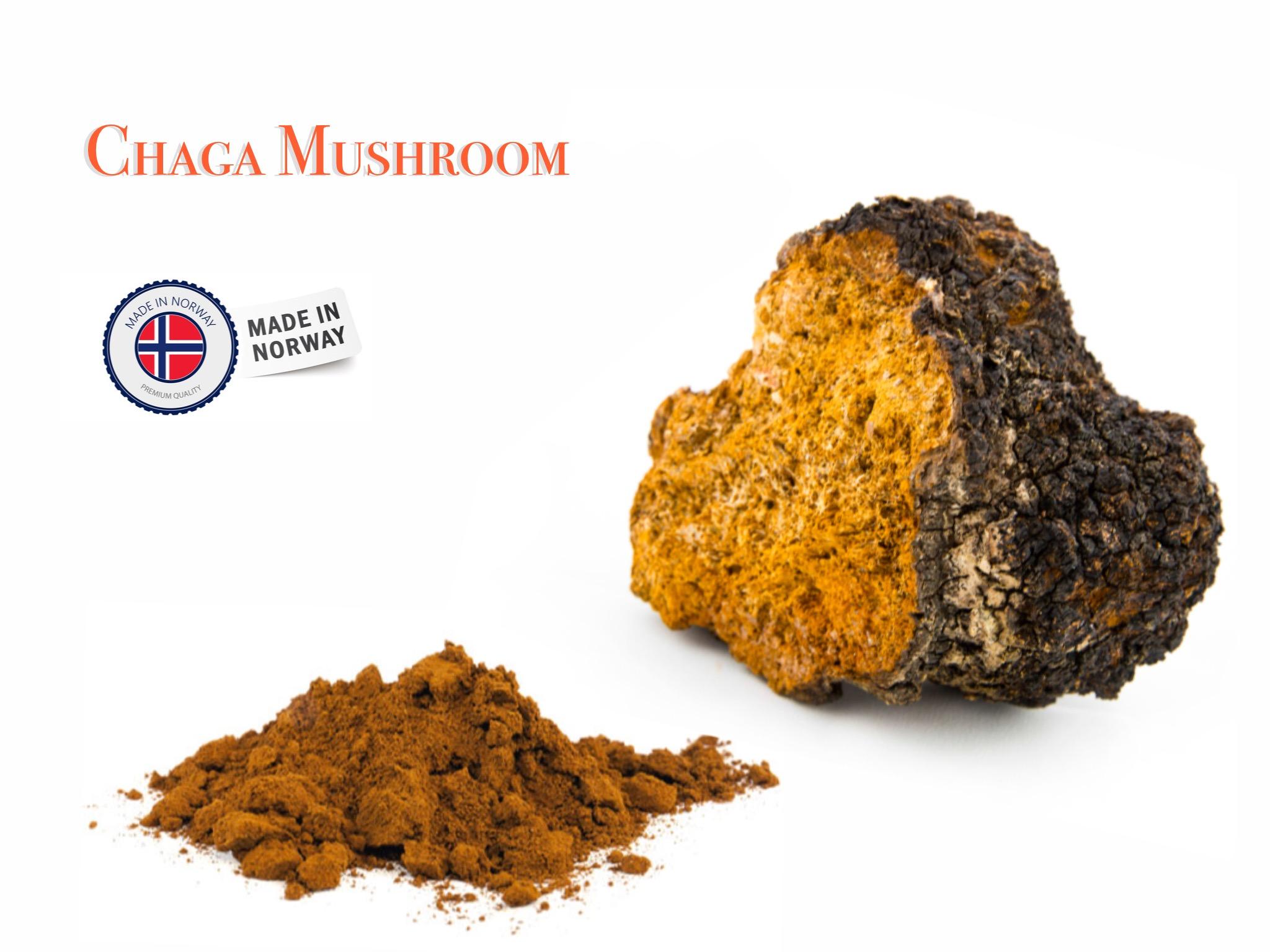 Chaga mushroom Image